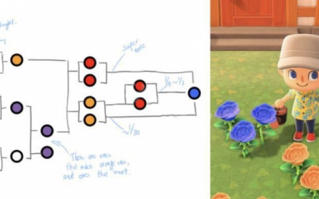 《集合啦動物森友會》藍玫瑰怎麼種